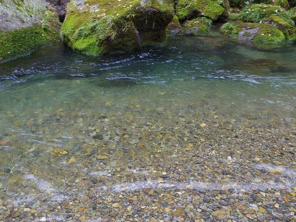 鵜の子滝6