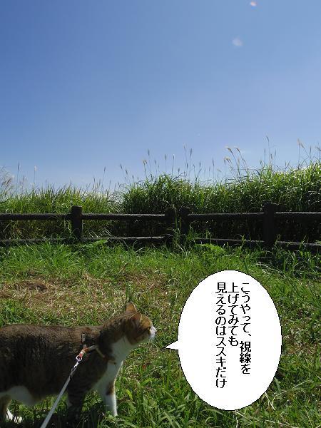瀬の本高原6