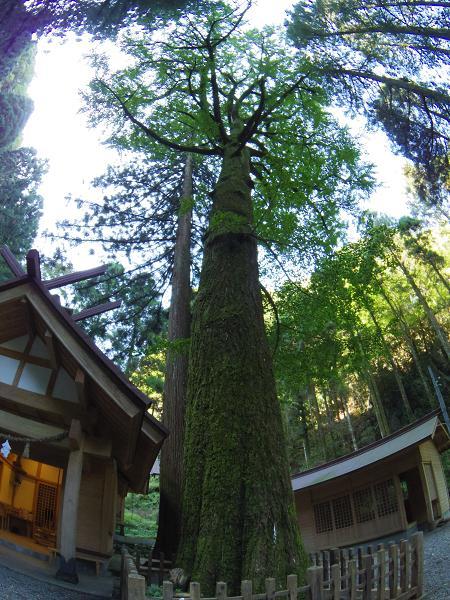 秋元神社11