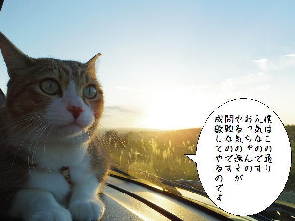 まいど(´・ω・`) 3