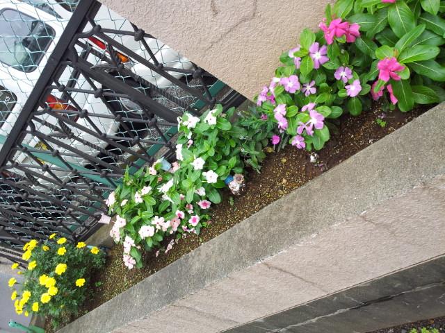 花壇 9月 Ⅱ