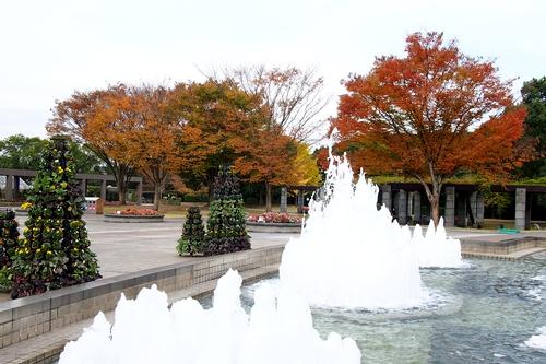 241123 植物園1