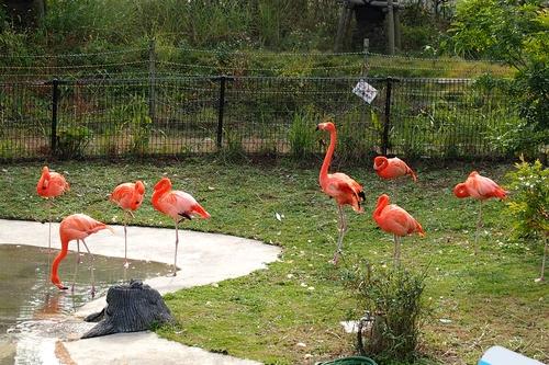 241123 動物園3