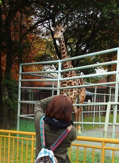241123 動物園12