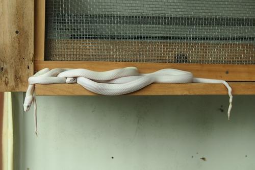 250105 蛇石神社13