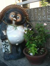タヌキとバラ