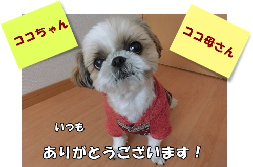 CIMG4139.jpg