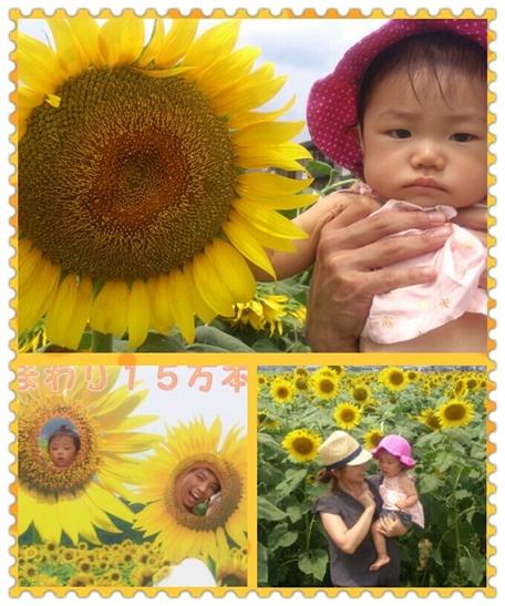 2012・8・12・向日葵畑