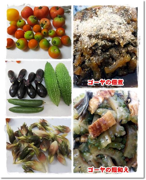 3012・8・13・頂いた野菜
