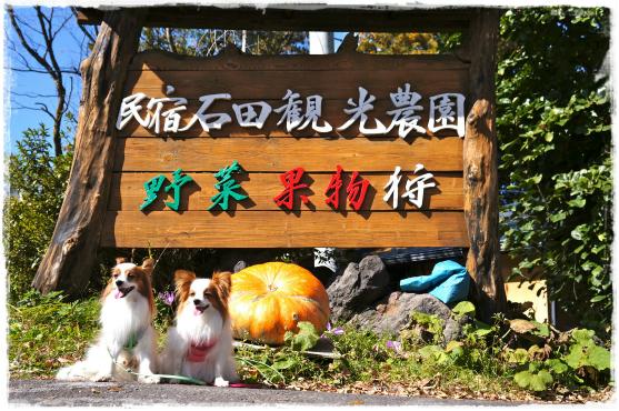石田農園①