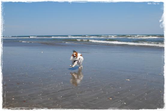 海岸で走る!!