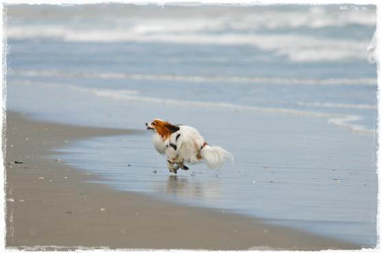 海岸大好き♪