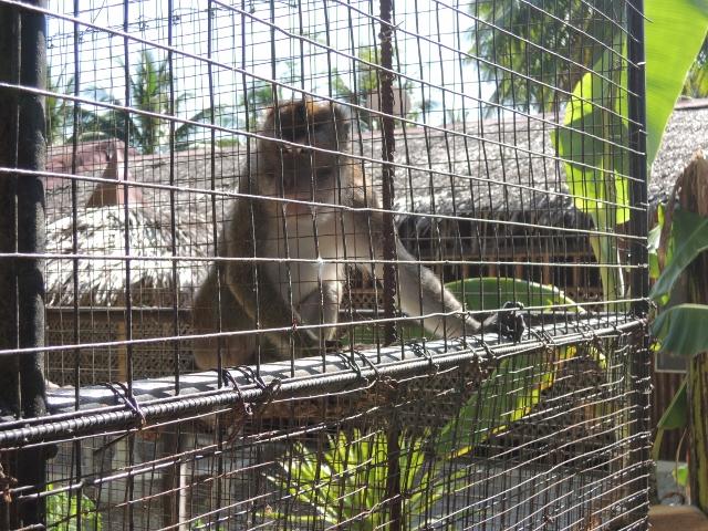 sipaway (45)