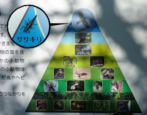 生態系とササキリ