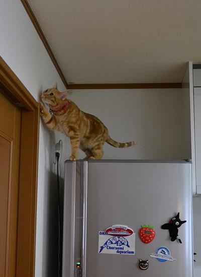 リンリンの冷蔵庫