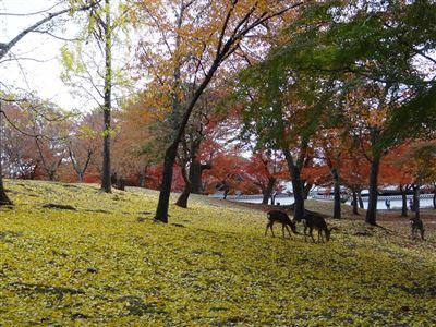 奈良公園1