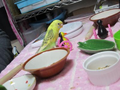 ぴーちゃん&ぷーちゃん