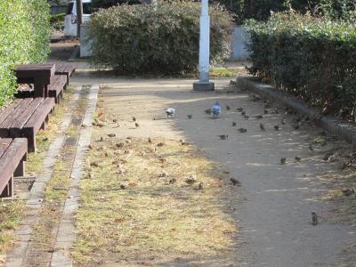 鳩&スズメ達