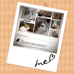 catcat7
