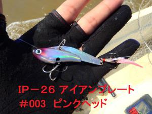 P70805051.jpg