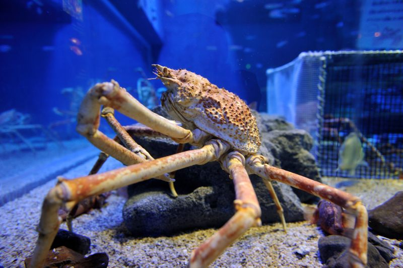 海遊館の生き物達 NEW1