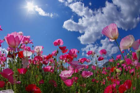 thumb5_20121027141946.jpg