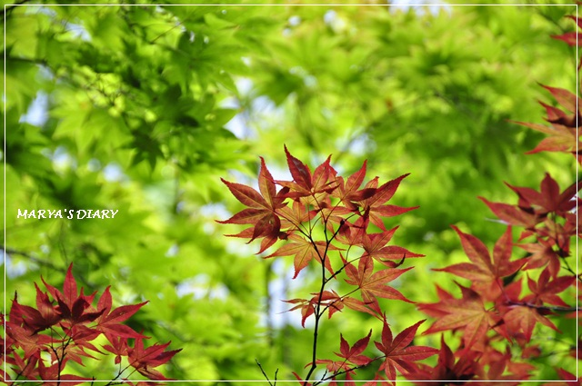 047_20120912164317.jpg