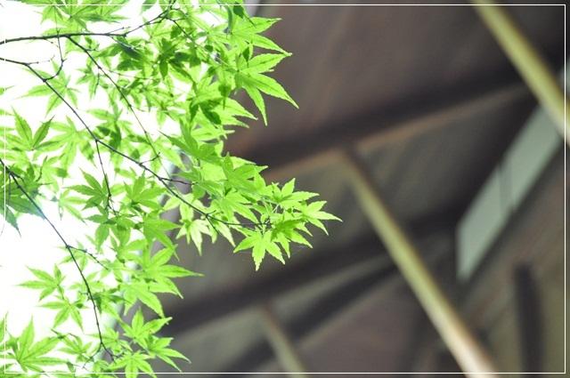 050_20120912170349.jpg
