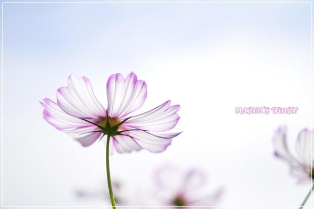107_20121014143727.jpg