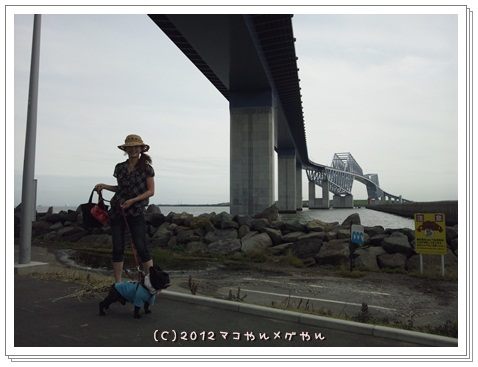 gatebridge4.jpg