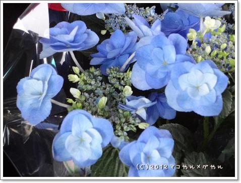 kisei2012GW8.jpg