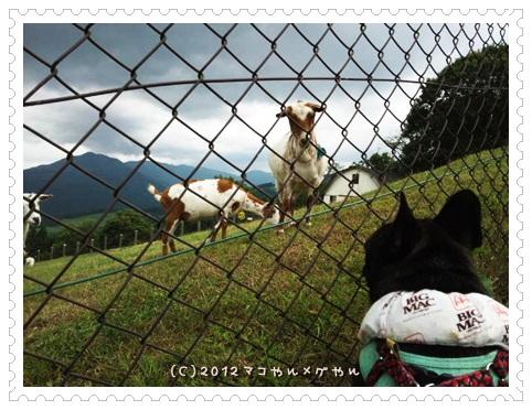 kuroyagi11.jpg