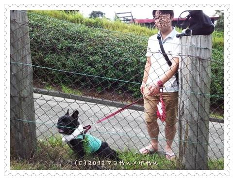 kuroyagi5.jpg