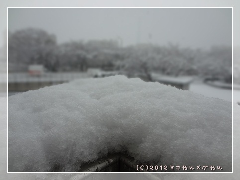 ooyuki1.jpg