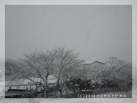 ooyuki2.jpg
