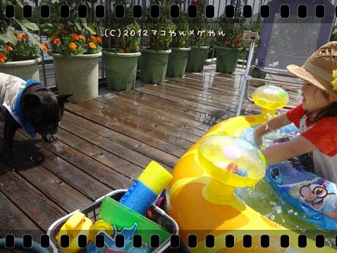 pool20122.jpg
