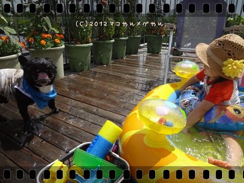 pool20123.jpg
