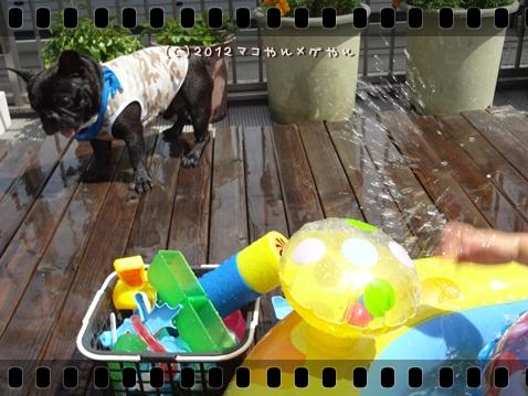 pool20125.jpg
