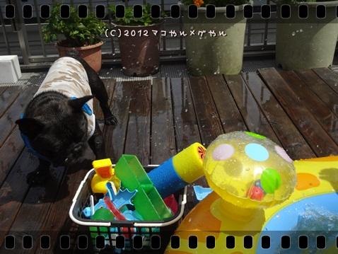 pool20126.jpg