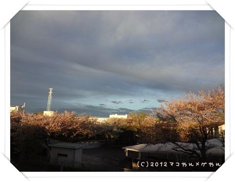 sakura20139.jpg