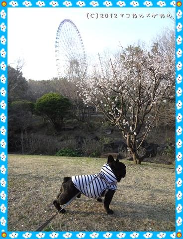 yakubinikasai14.jpg