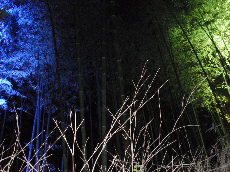 花灯路・竹林の小径