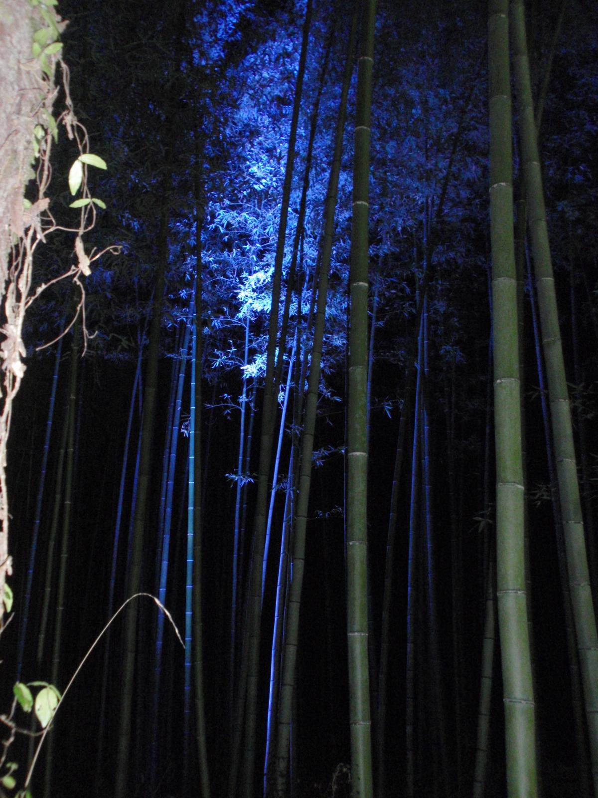 花灯路・竹林の小径3