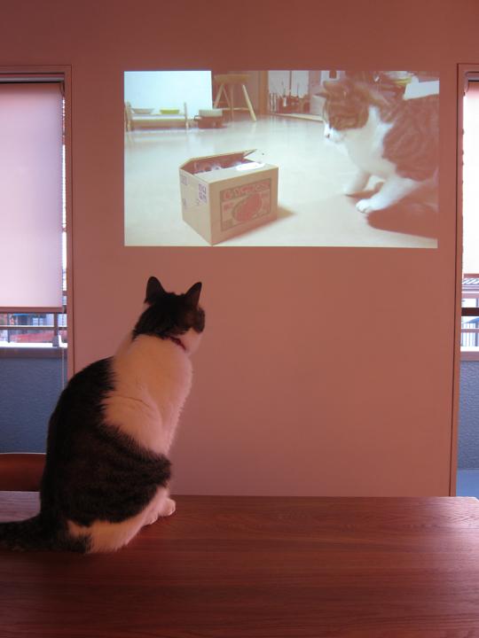 mame_projector.jpg