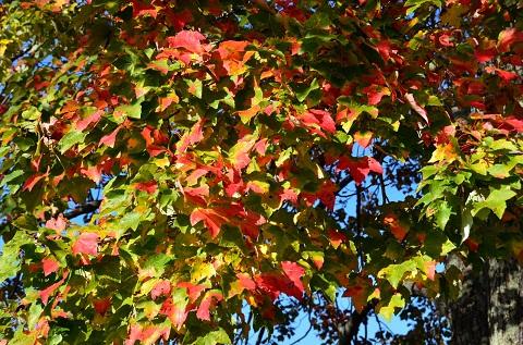 121130 色づく葉