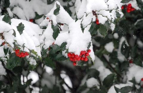 121227 雪と赤い実