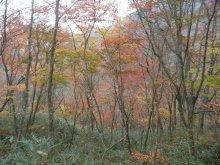 しょうすけ_のブログ-20111030siramizu08