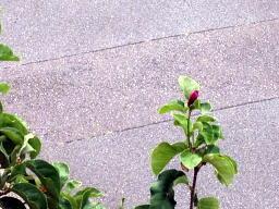 8月も最後なのにまた花を付けてるよ~