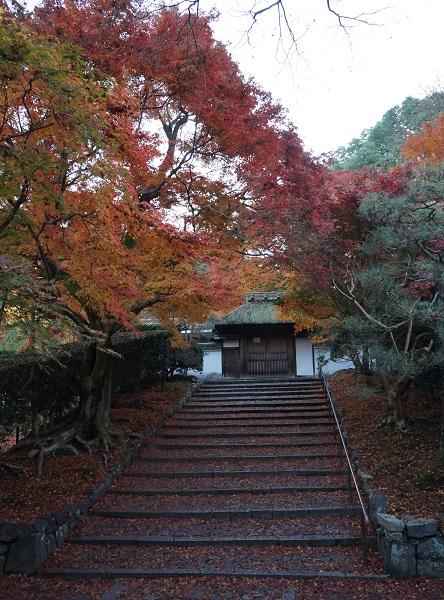 kyoutokouyou1411-003b.jpg