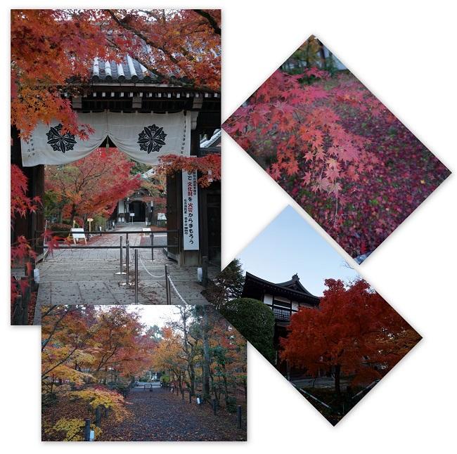 kyoutokouyou1411-006b.jpg